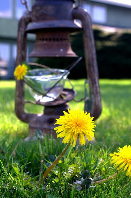 Dandelion Milk - a funny little story from the past on how tricky we were as kids, by Funky Junk Interiors