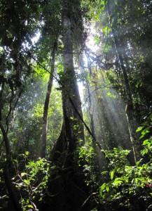 Penjelasan Contoh dan pengertian gejala alam Abiotik