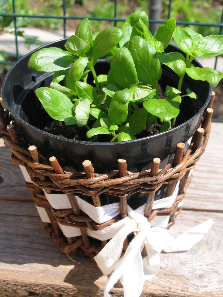 La magia di un piccolo orto: l'orto senza orto: coltivare in vaso