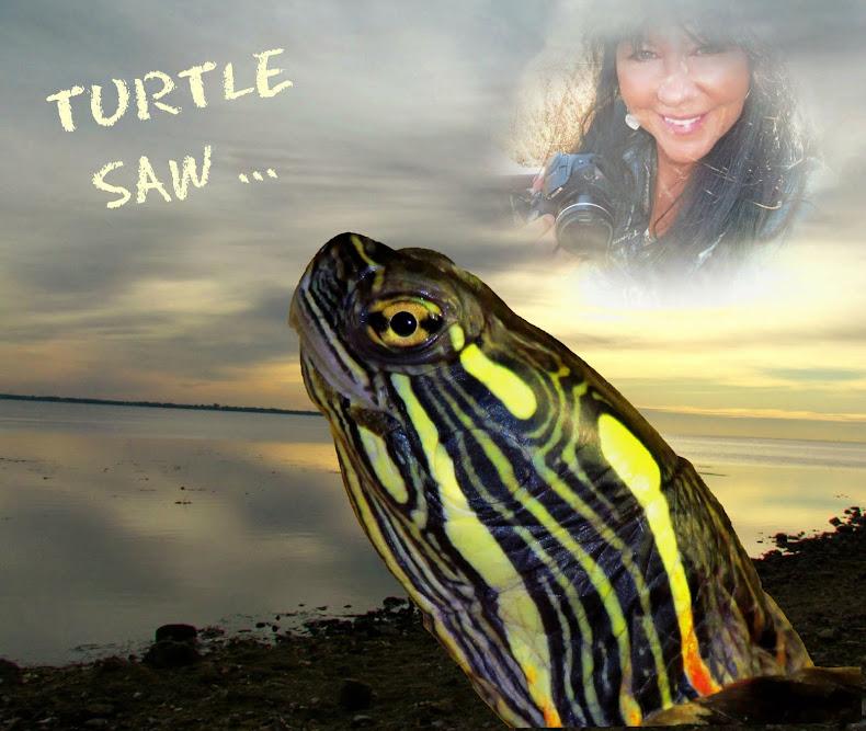 Turtle Saw ...