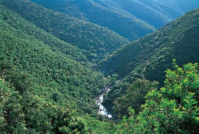 Biologia valle fluvial for Pisos en montornes del valles