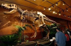 Teori baru kepunahan Dynosaurus
