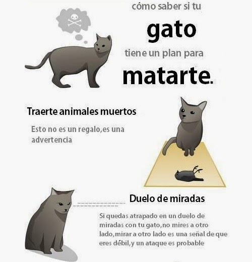 Cómo saber si tu gato tiene un plan para matarte