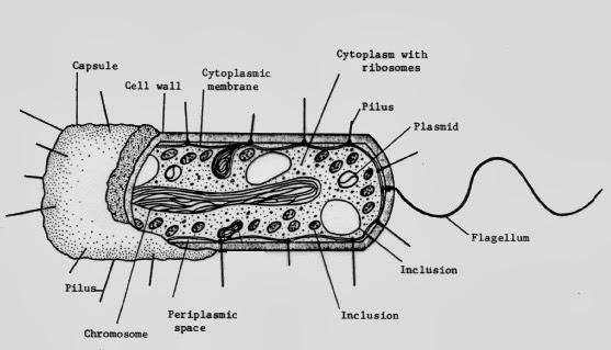 microbiology - mcb2010
