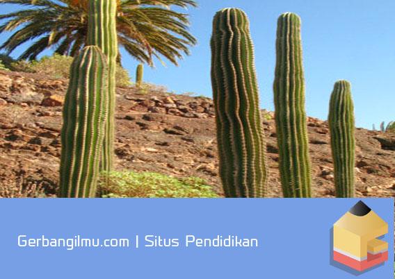 gambar tanaman kaktus adaptasi morfologi
