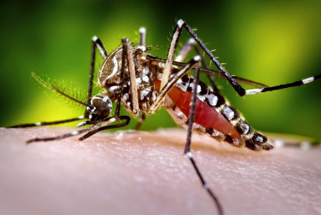 Kenapa nyamuk suka gigit anda berbanding orang lain