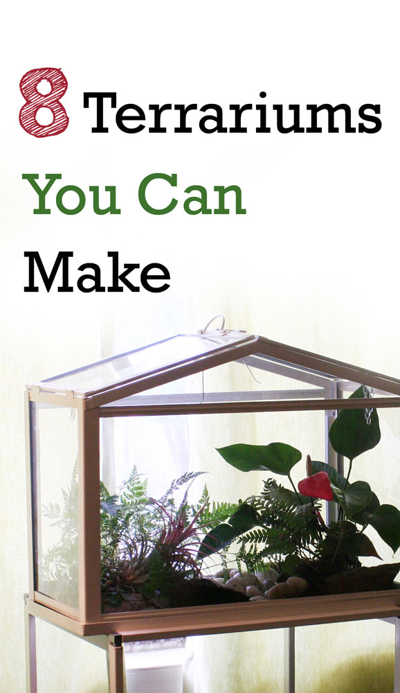 The Rainforest Garden 8 Terrarium Diy Projects