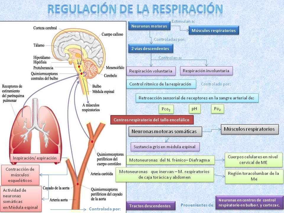 Blog de evidencias de Fisiología Médica de Evelyn Roxana