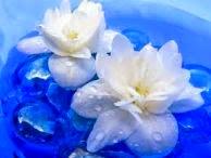 bunga melati, melati, manfaat bunga melati, khasiat bunga melati,