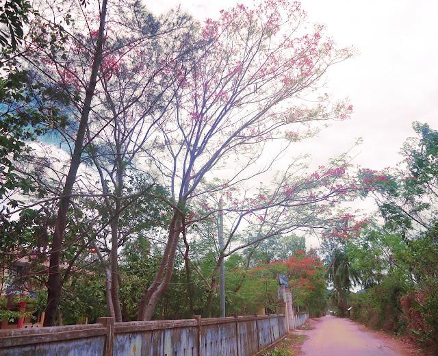 Góc trường Xuân Phương