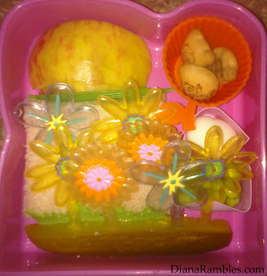 basic bento lunch pack