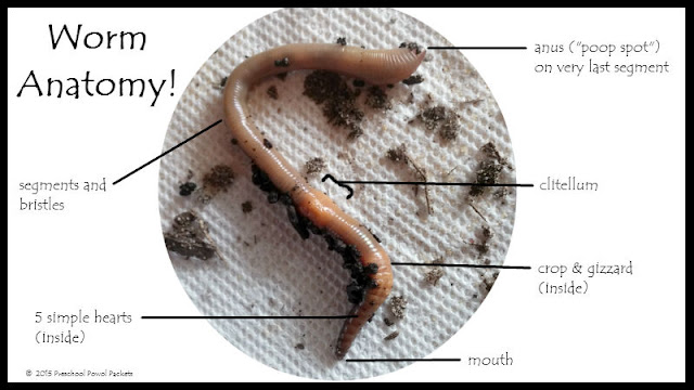 Simple Earthworm Diagram Labeled Crazywidowfo