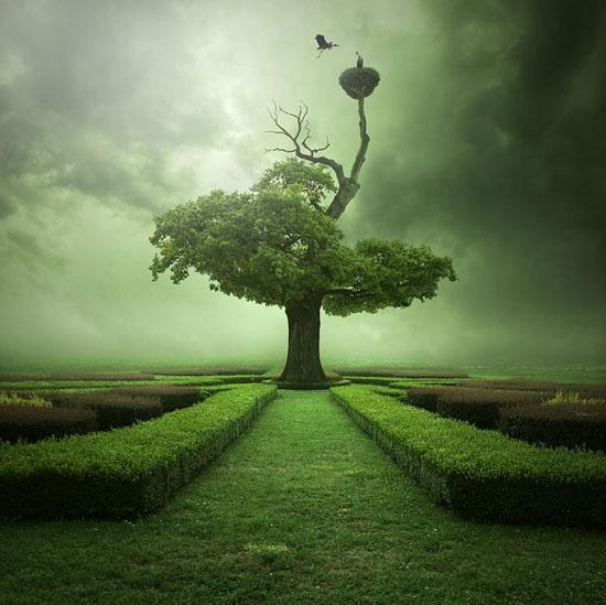 Illusion Photography Oak