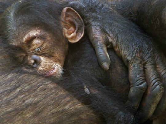 Skeptic: 10 Reasons to NOT Believe in Bigfoot
