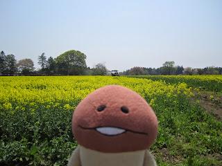 Namiki Gelato Canola Flower Field ナミキジェラート 菜の花畑