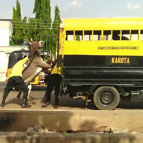 No one is above the law, not even a donkey as road traffic agency arrests Donkey in Nigeria