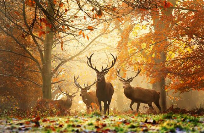 Animais em paisagens de Outono