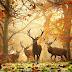 Belos animais contemplando as cores de outono
