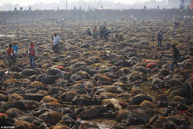 Nepal Hentikan Penyembelihan Haiwan Beramai-Ramai