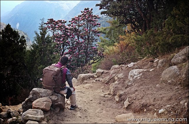 Trek-Campo-Base-Everest-Namche-Bazaar-Tengboche_