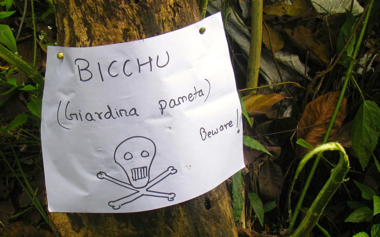 Bichu buti
