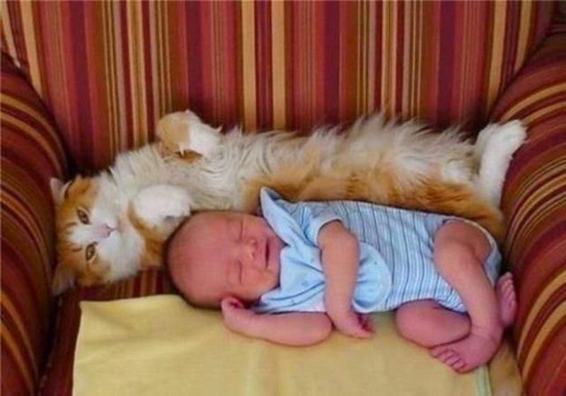 Foto baby lucu tidur dengan kucingnya