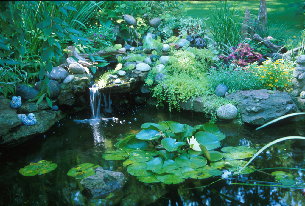 Water Garden Water Gardens Grow In Popularity But Require Caution
