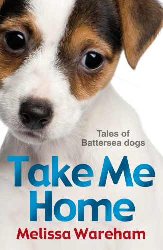 Pepe Battersea Dogs Home