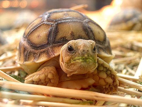 Information of Animal: Tips Keeping Turtles