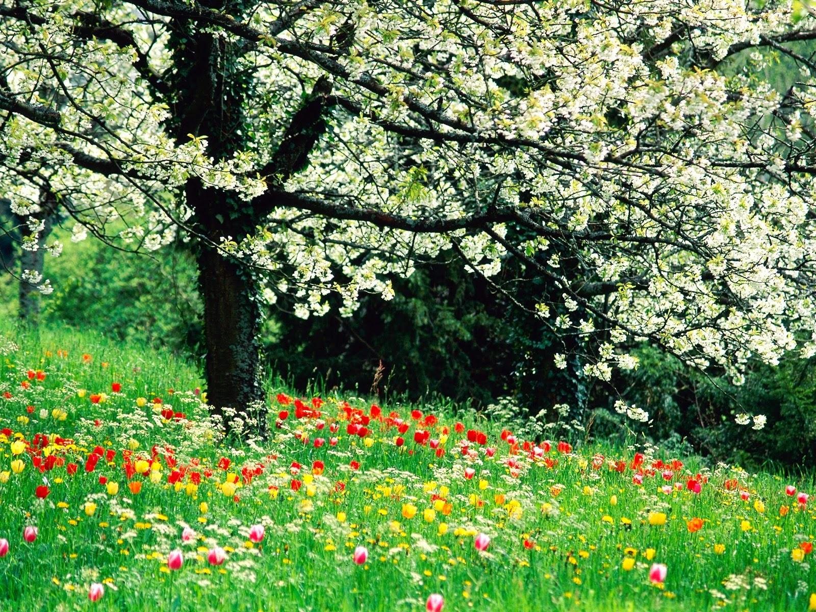 Beautiful spring flowers wallpapers beautiful flowers wallpapers beautiful spring flowers izmirmasajfo