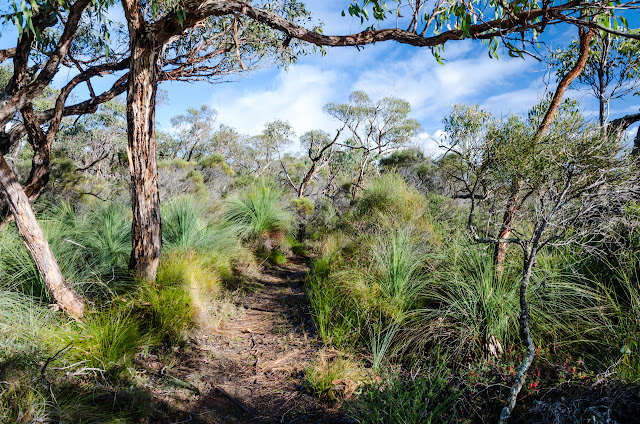 track between grass trees