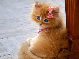 Hermosa Kitty