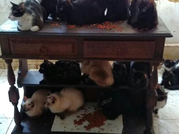 Gatos foram retirados de apartamento na Tijuca (Foto: Divulgação/Polícia Civil)