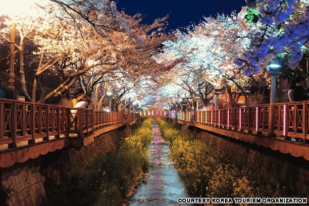 Yeojwa Stream (경상남도 진해 여좌천 벚꽃길)