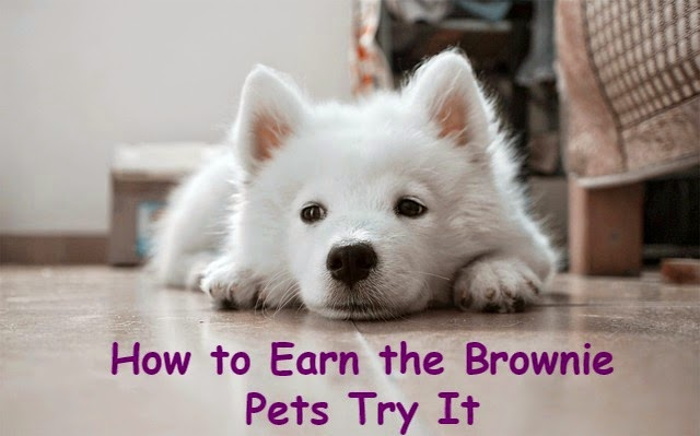 Meeting ideas and resources on how to earn the Brownie Pets badge