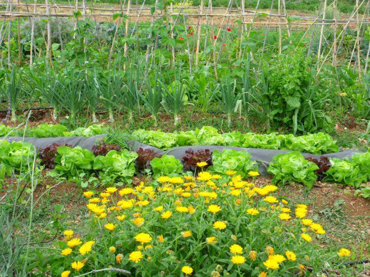 Huerto jardin ecologico entender los hongos for Hongos en las plantas de jardin