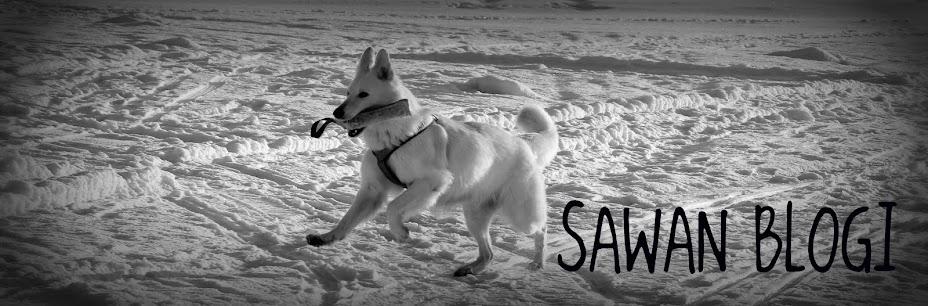 Sawan blogi