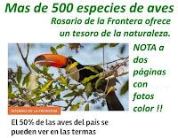 GRAN NOTICIA: Más de 500 especies de aves podemos observar en Rosario de la Frontera