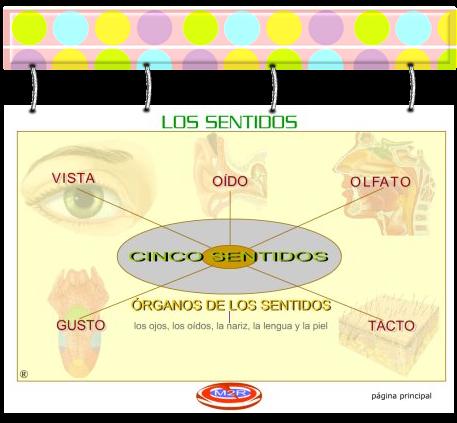 external image sentidos.png