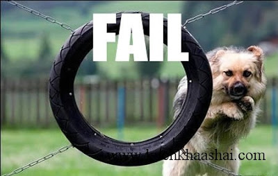 12 Funny Animal Fails