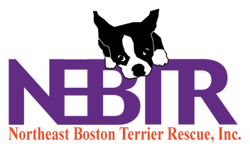 Northeast Boston Terrier Rescue