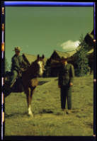 The Ranger Archivist The Morgan Horses Of Yellowstone