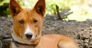 Can You Identify A Dog Breed By Its Bark