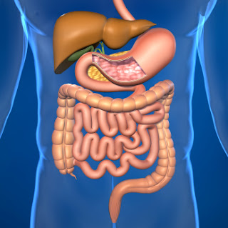 Gastroenterology Diseases