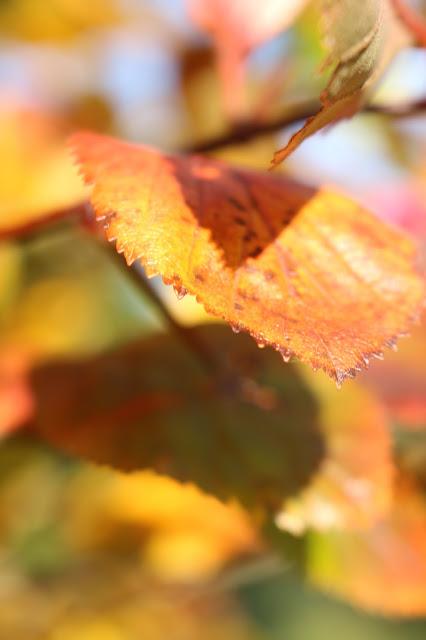 leaves autumn colours photos