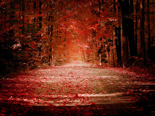 Falling Red Leaves Trees HD Wallpaper