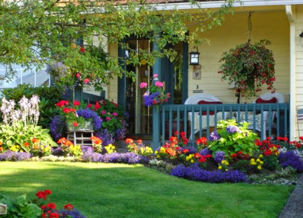 front yard landscaping with green
