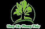 Bán Cây Kim Tiền - Cây Cảnh Phong Thủy