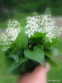 Ekorrbär Maianthemum bifolium