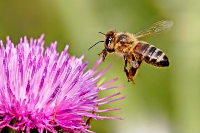 Με τη Bayer ή με τις μέλισσες;